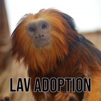 Adoptioner